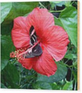 Hibiscus And Butterfly Diners Wood Print