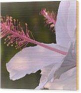 Hibiscus Bloom Pastel Wood Print