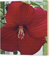 Hibiscus By Picket Fence Wood Print