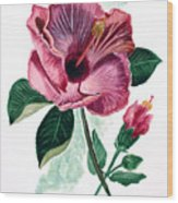 Hibiscus Dusky Rose Wood Print