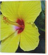 Hibiscus Flower 1 Wood Print