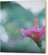 Hibiscus Flower In A Garden Wood Print