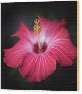 Hibiscus Flower Wood Print