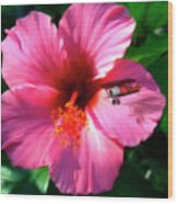 Hibiscus Fly-by Wood Print