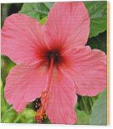 Hibiscus Front Wood Print