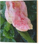 Hibiscus Heaven Wood Print