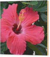 Hibiscus I Wood Print