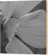 Hibiscus In Detail Wood Print