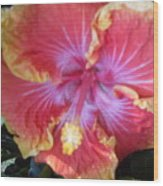 Hibiscus In Living Color Wood Print