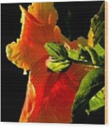 Hibiscus In The Light Wood Print