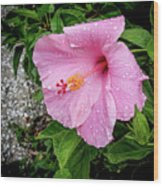 Hibiscus On A Rainy Day Wood Print