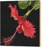 Hibiscus On Black Background Wood Print