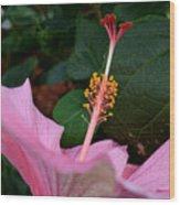 Hibiscus Pink Flower Wood Print