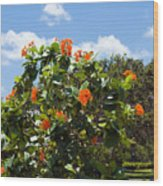 Hibiscus Rosasinensis With Fruit Wood Print
