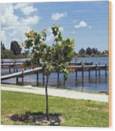 Hibiscus Rosasinensis With Fruit On The Indian River In Florida Wood Print