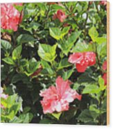 Hibiscus Tree Wood Print