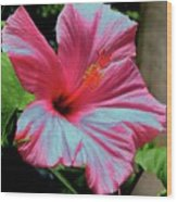 Hibiscus With A Solarize Effect Wood Print