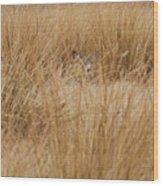 Hidden Mule Deer Wood Print