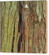 Hidden On The Tree Wood Print
