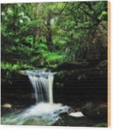 Hidden Rainforest - Painterly Wood Print