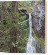 Hidden Rainforest Treasure Wood Print