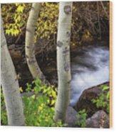 Hidden Stream Wood Print