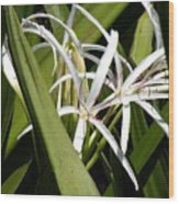 Hidden Swamp Lily Wood Print