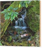 Hidden Treasures Wood Print