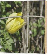 Hidden Yellow Tulip 02 Wood Print