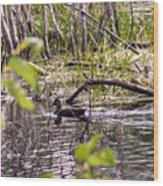 Hide And Seek Ducks Wood Print