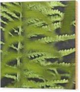 Hide N Seek Wood Print
