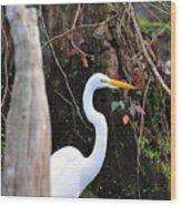 Hiding Egret Wood Print