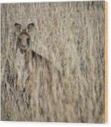Hiding In Plain Sight Wood Print