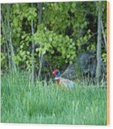 Hiding In The Grass. Pheasant Wood Print