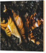 Hiding Tiger Wood Print