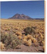 High Altitude Puna Grasslands And Miniques Volcano Chile Wood Print