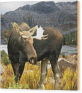 High Country Moose Wood Print