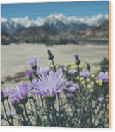 High Desert Wildflowers Wood Print