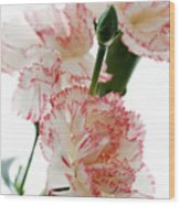 High Key Pink And White Carnation Floral  Wood Print