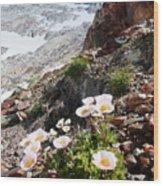 High Mountain Flowers Wood Print