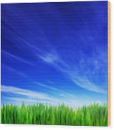 High Resolution Image Of Fresh Green Grass And Blue Sky Wood Print