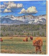 Highland Colorado Wood Print