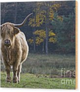 Highland Cow In France Wood Print
