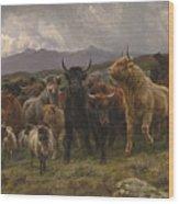 Highland Raid Wood Print