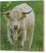 Highland White  Wood Print