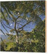 highlands in Costa Rica 2 Wood Print