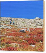 Hikers And Autumn Tundra On Mount Yale Colorado Wood Print