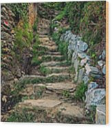 Hiking In Cinque Terre Italy Wood Print