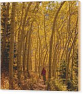 Hiking In Fall Aspens Wood Print