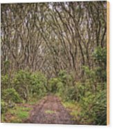Hiking On Rangitoto New Zealand Wood Print